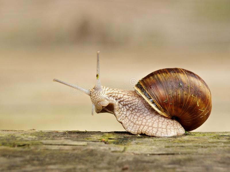 Download Snail stock image. Image of rising, snail, roman, photo - 17658371