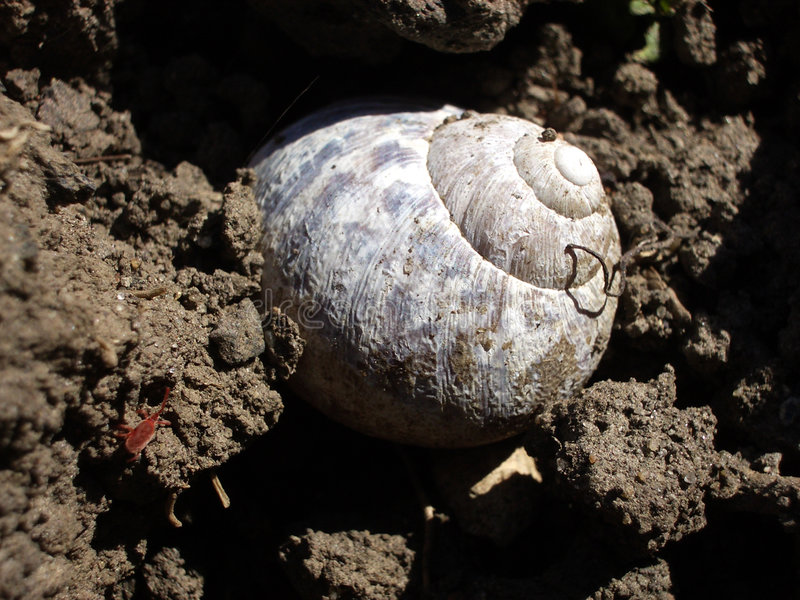 Download Snail stock photo. Image of colour, shell, insect, snail - 196498