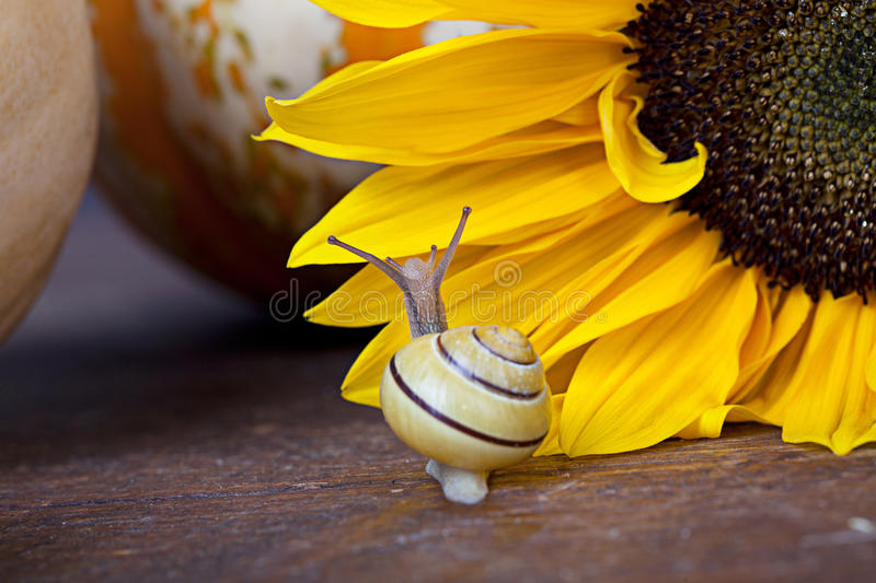 Download Snail stock image. Image of pattern, funny, animal, slimy - 21439991