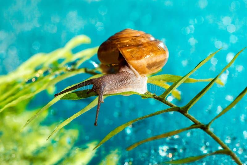 Download Snail stock photo. Image of snail, slug, leaf, leech - 27160442