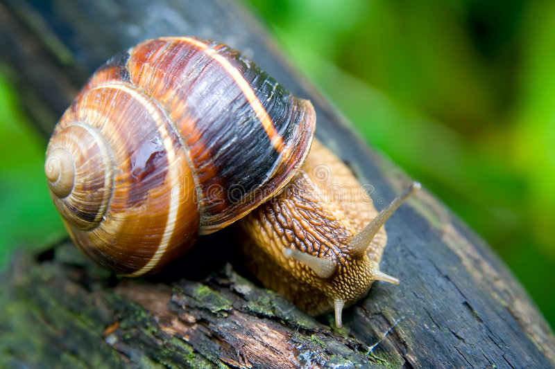 Snail 3 royalty free stock images