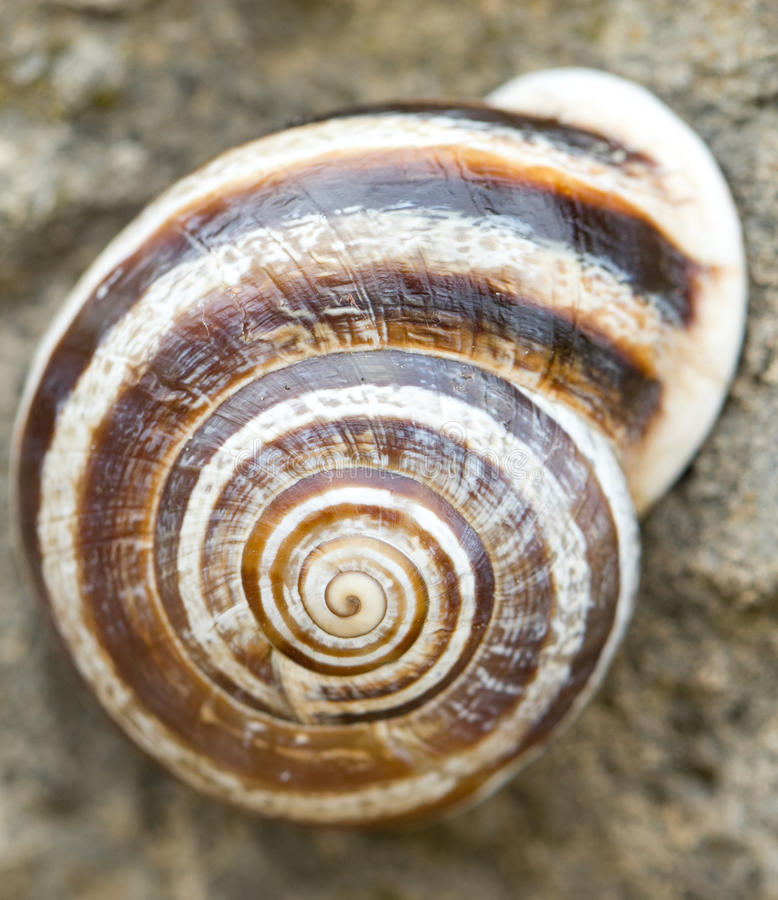 Free Snail Royalty Free Stock Photography - 36520477