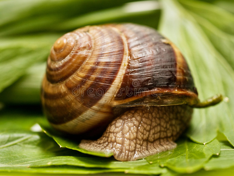 Download Snail Stock Image - Image: 5277991