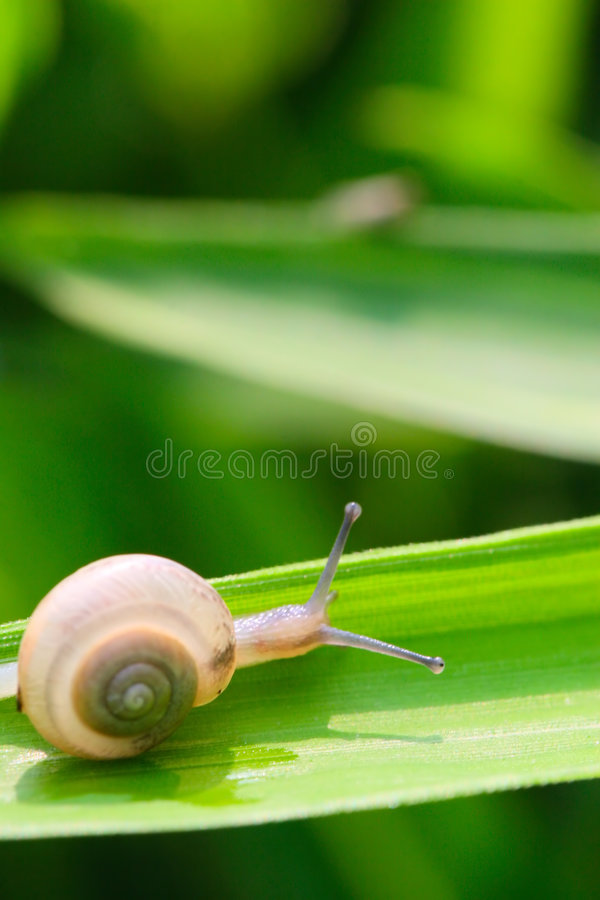 Free Snail Stock Photo - 5364060