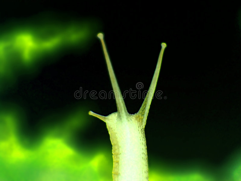 Snail 7 royalty free stock image