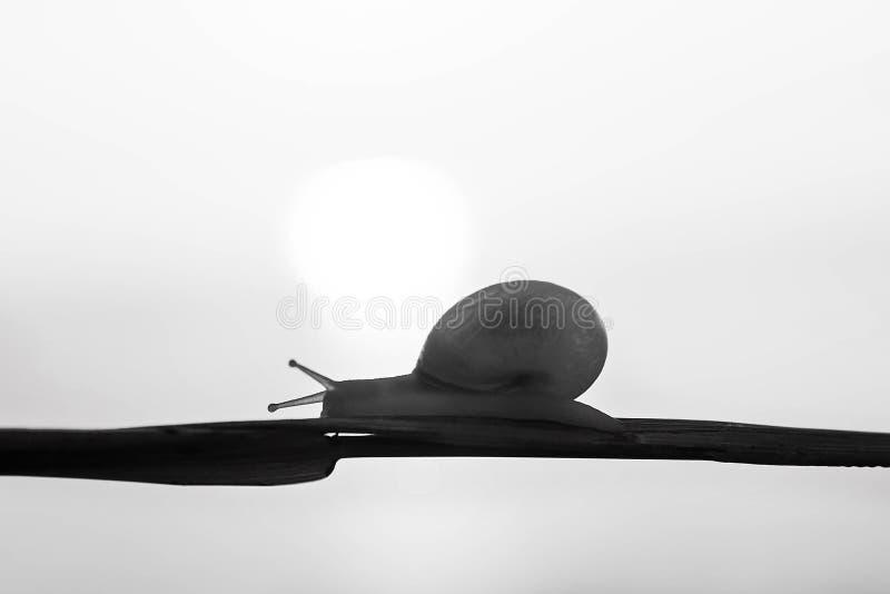 Snail2 fotografía de archivo