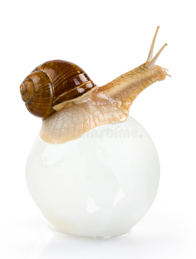 Free Snail Royalty Free Stock Images - 9476649