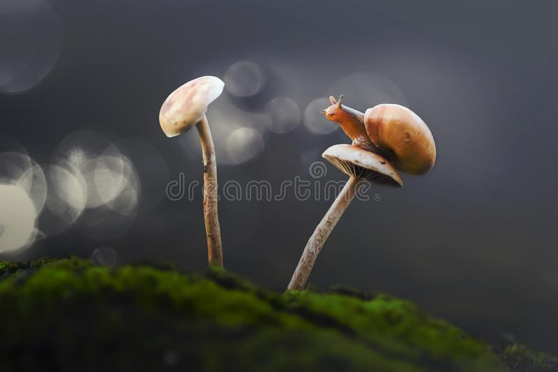 Snail, animals, macro, bokeh, insect, nature, stock photo