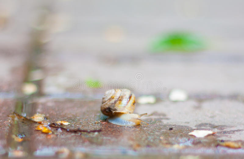 Snail on the asphalt royalty free stock images