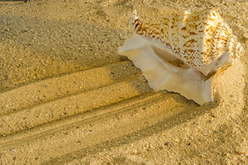 Download Snail at a beach stock photo. Image of shell, relaxation - 34630456