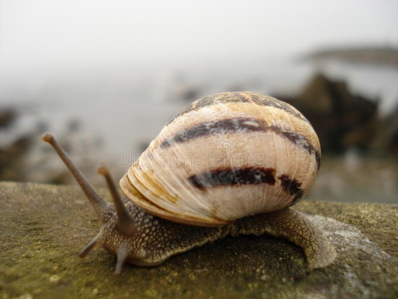 Snail of brown and black bands moving slowly on wooden railing with bottom of view to the sea royalty free stock photos