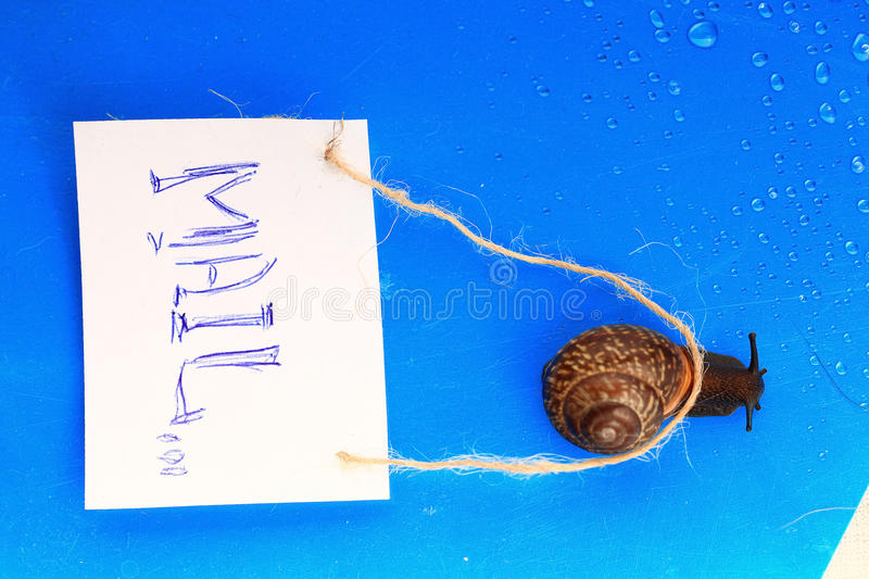 Snail carries little letter stock photography