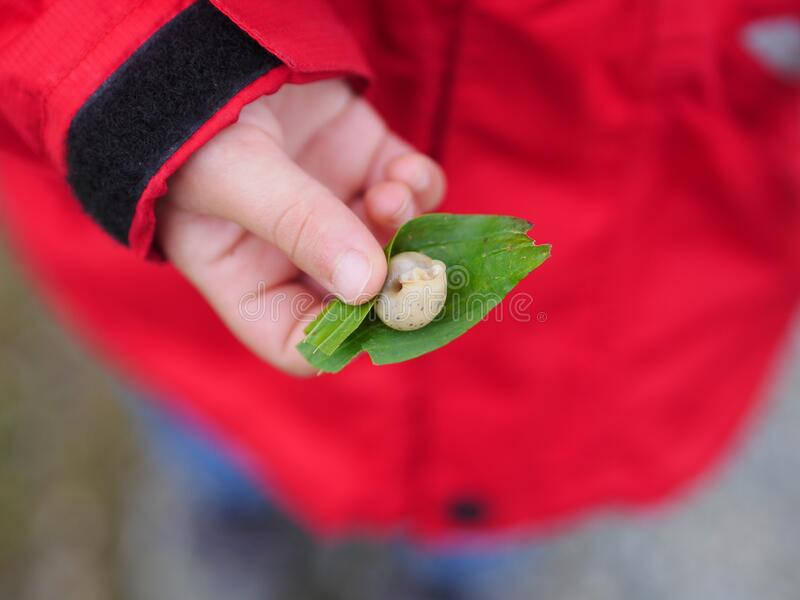 Snail in child hand royalty free stock image