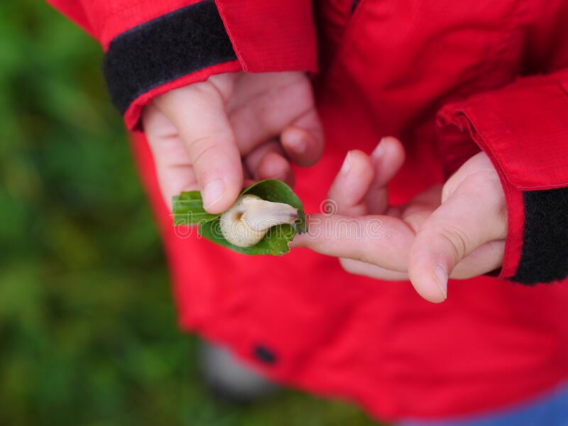 Snail in child hand royalty free stock photo