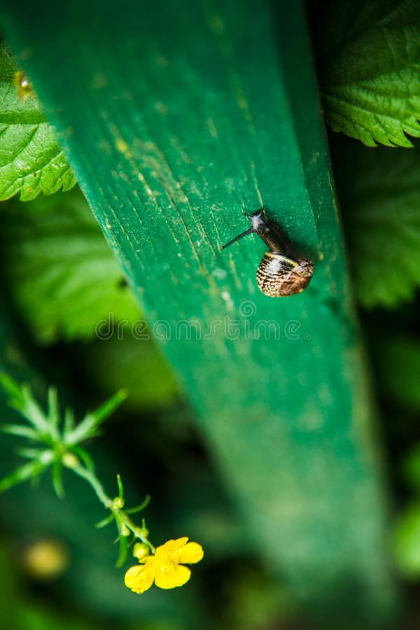 Snail climbing up a green fence stock photography