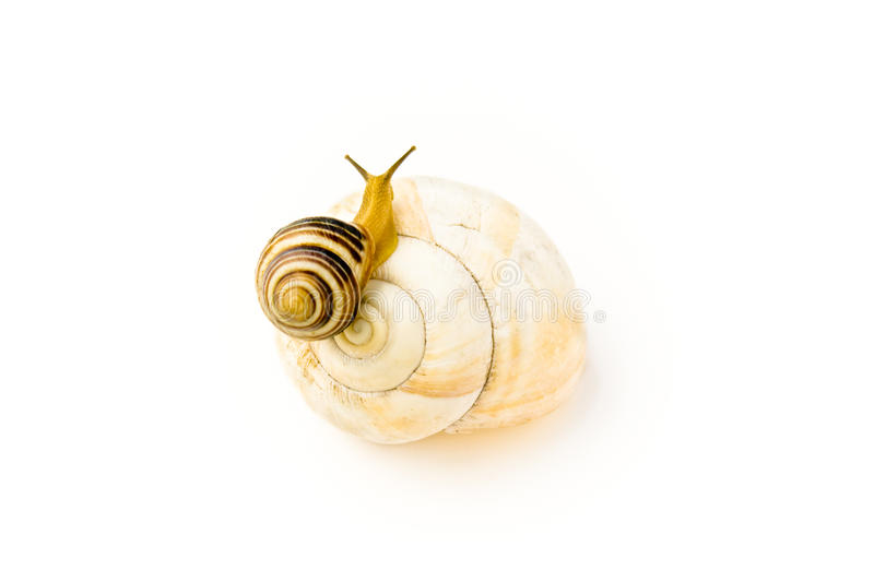 Download Snail Climbs To Bigger And Nicer House Stock Photo - Image: 19550692