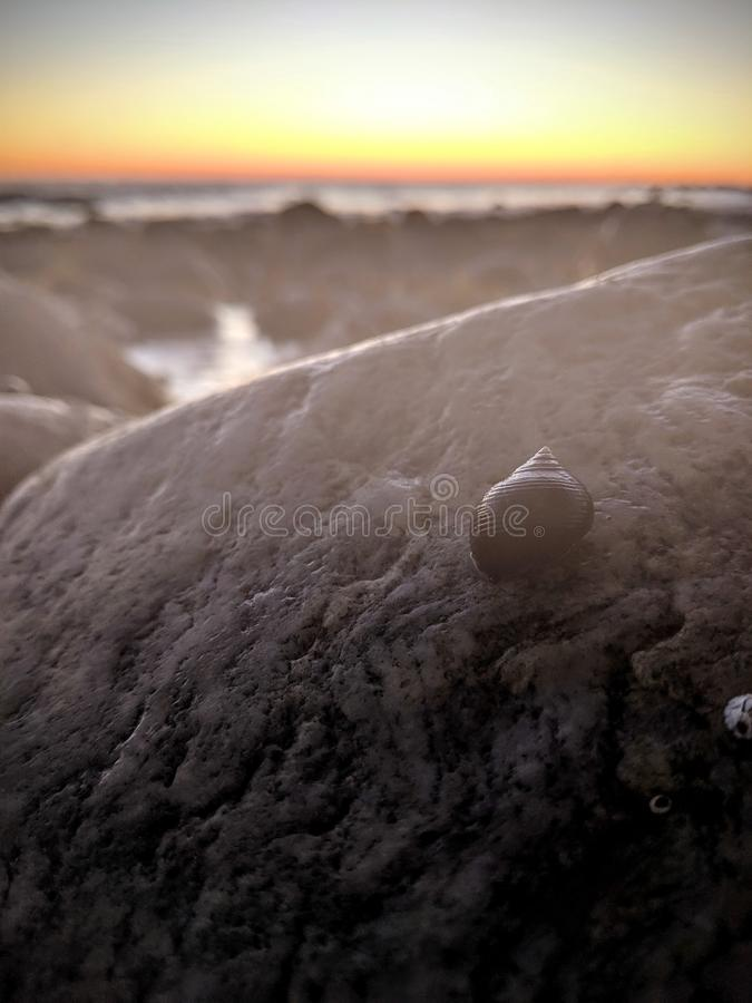 A Snail on a Rock at Sunrise stock images