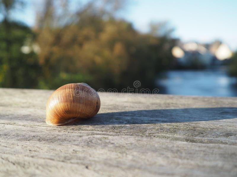 Snail, Close Up, Snails And Slugs, Seashell royalty free stock photos