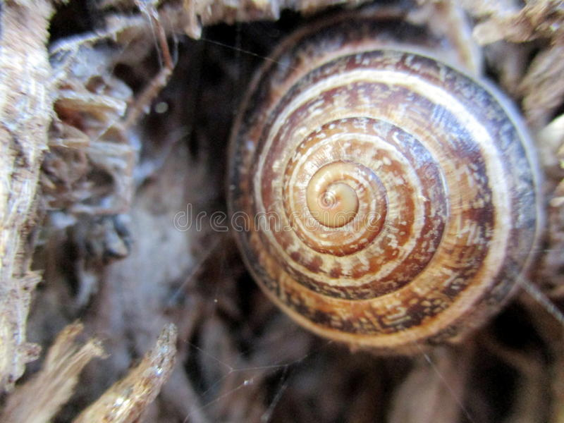 Snail close-up royalty free stock images