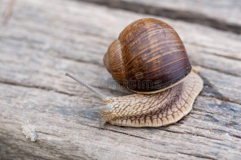 Snail stock image