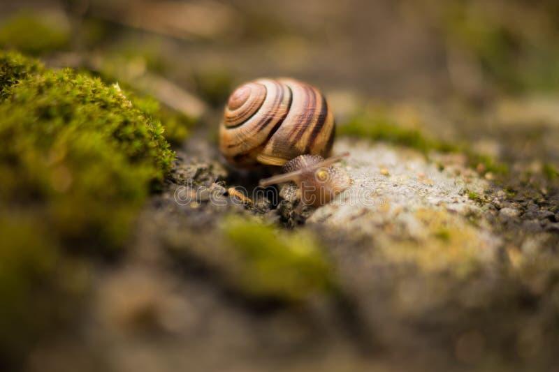 Snail Closeup Free Public Domain Cc0 Image