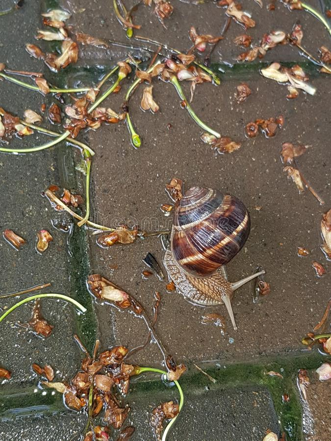 Snail closeup royalty free stock images