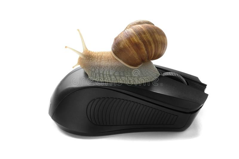 Snail on computer mouse. Concept speed internet slow stock photo