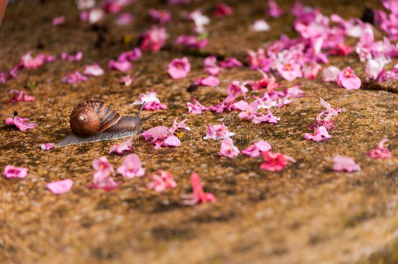 A snail crawling along after the rain stock image