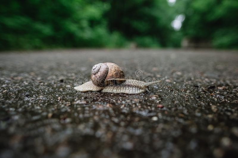 Snail crawling on asphalt close-up view on blurry background royalty free stock images