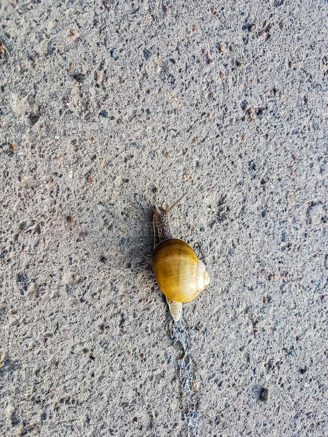 Snail crawling on the asphalt road royalty free stock photography
