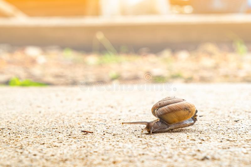 Snail crawling slowly on the rough cement floor. Helix pomatia, snail crawling slowly on the rough cement floor with patience expressing its resistibly efforts stock image
