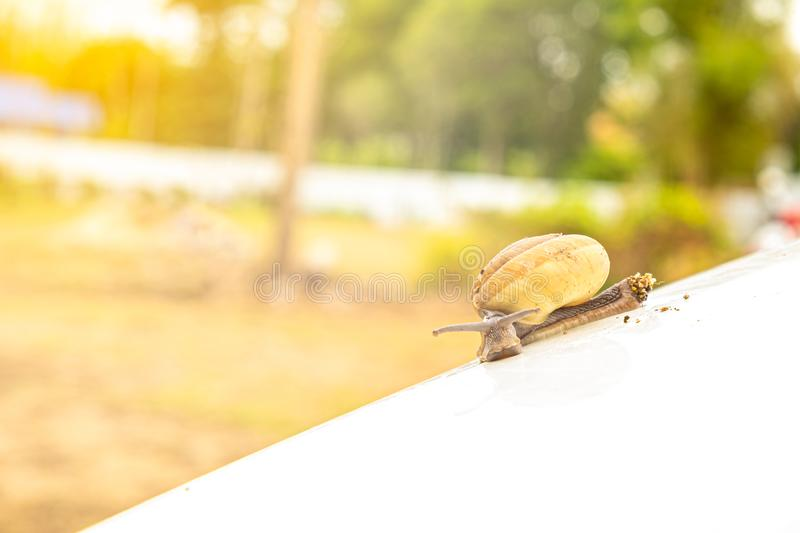Snail crawling slowly on white bonnet. Helix pomatia, snail crawling slowly on white bonnet with patience expressing its resistibly efforts under sunshine, copy stock image