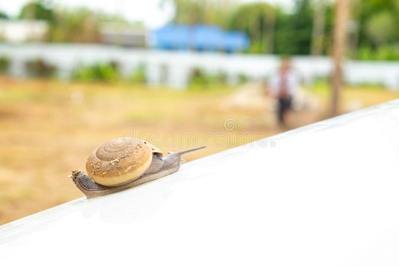 Snail crawling slowly on white bonnet. Helix pomatia, snail crawling slowly up to white bonnet with patience expressing its resistibly efforts royalty free stock photography