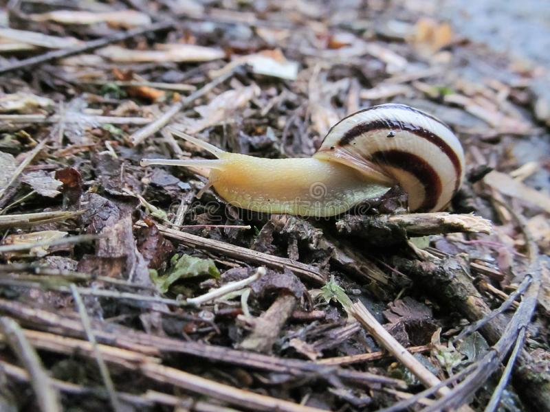 Snail crawling on a tree or bark stock images