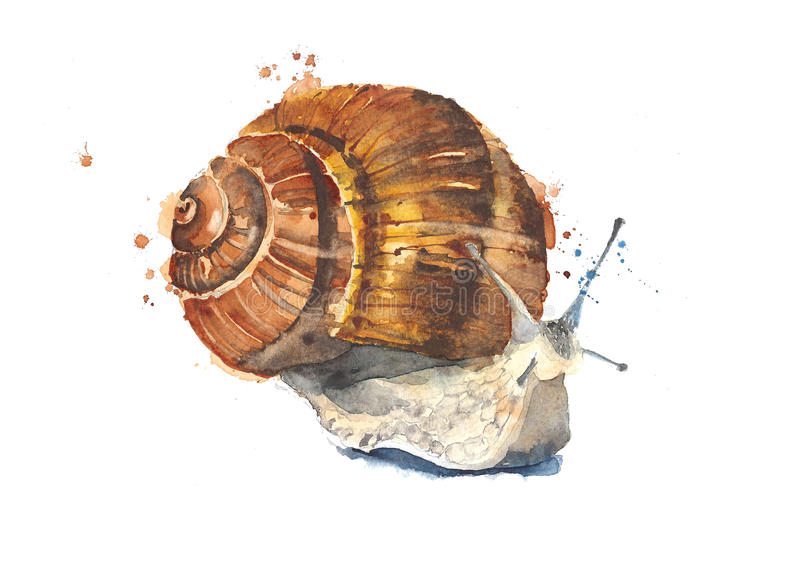 Snail crawling watercolor painting illustration isolated on white background vector illustration