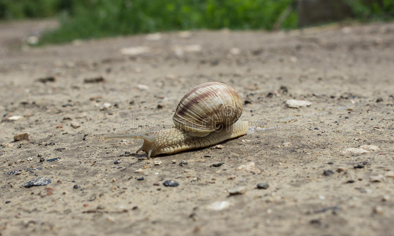 Snail crossing the road royalty free stock photography