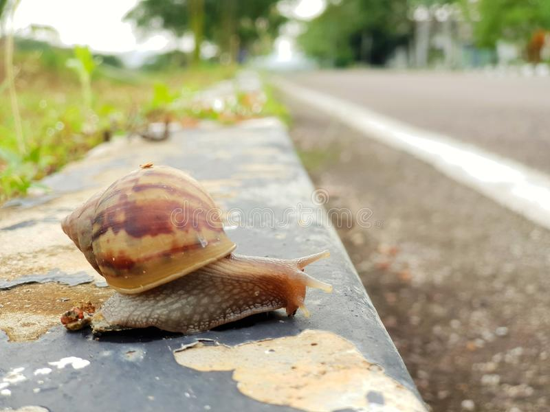 Snail crossing the road royalty free stock photos