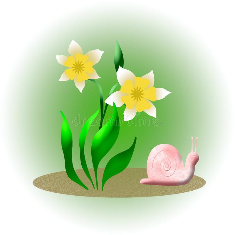 Download Snail and daffodil stock illustration. Illustration of pink - 22578704