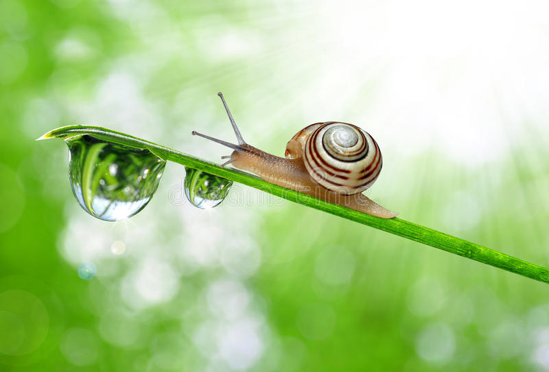 Snail on dewy grass. Close up stock photography