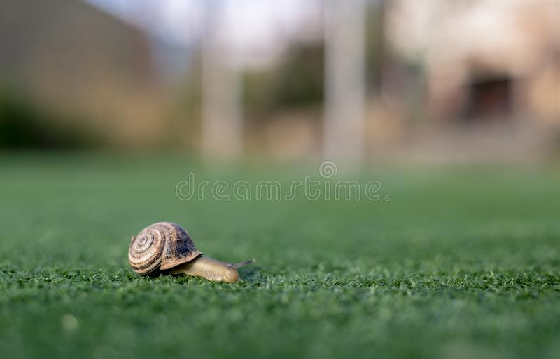 Snail dragging her little house along artificial grass, the blur it seems to run down a track. Snail on artificial grass, always slow stock image