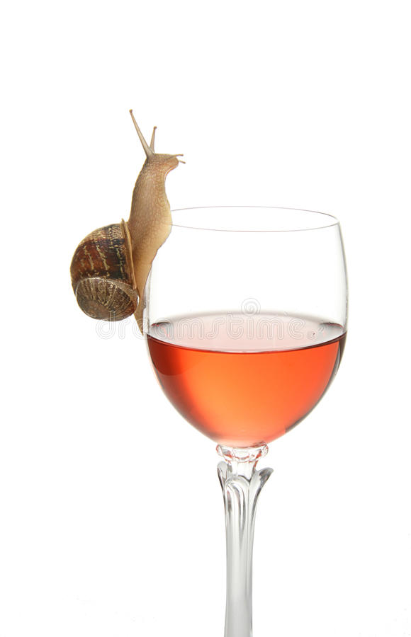Free Snail Drinking Stock Photography - 9814062