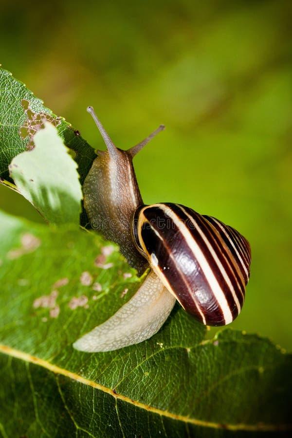 Snail in Edwards Gardens royalty free stock photos