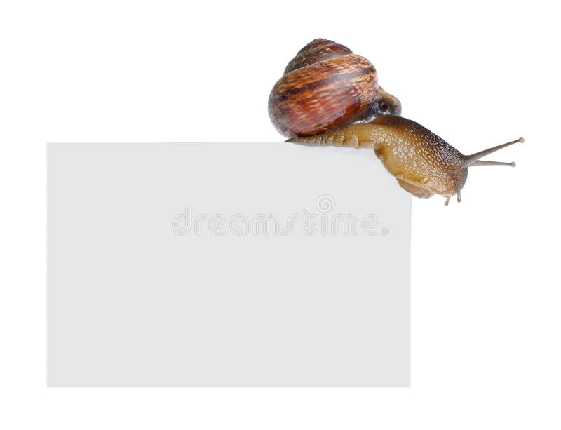 Snail on empty poster royalty free stock photo