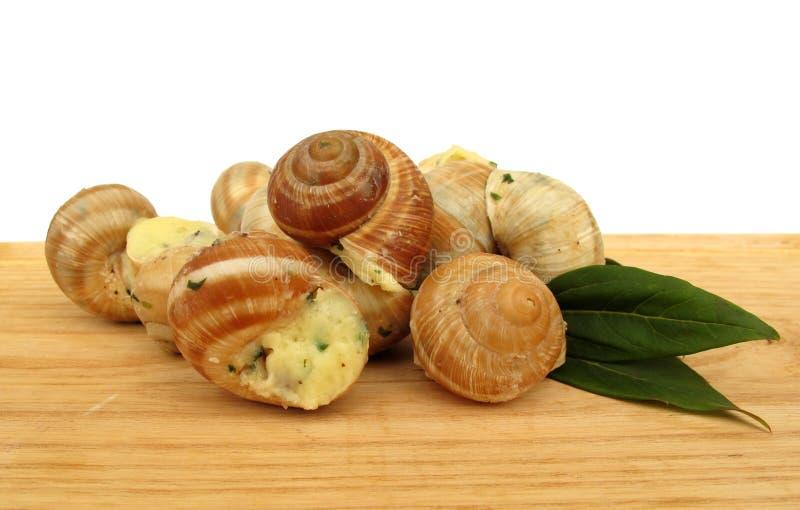 Snail escargot prepared as food stock photography