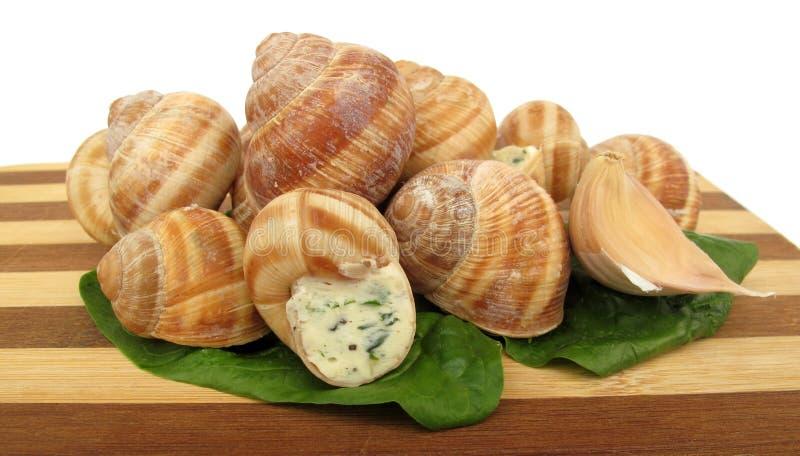 Snail escargot prepared as food royalty free stock photo
