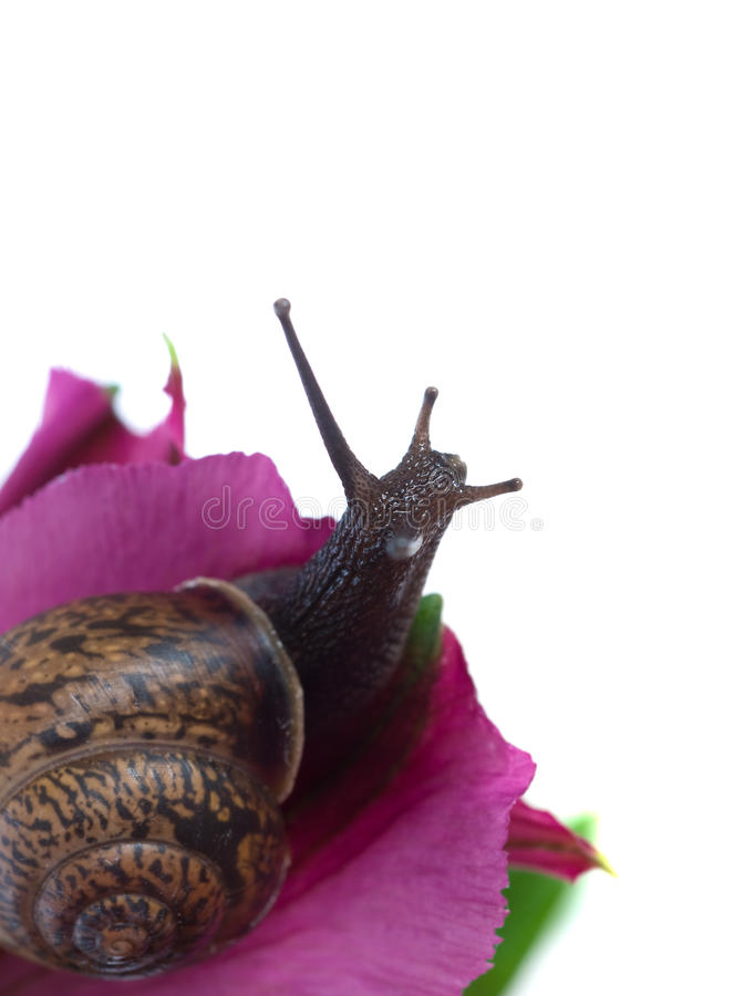 Download Snail and flowers stock photo. Image of brown, flora, floral - 9990964