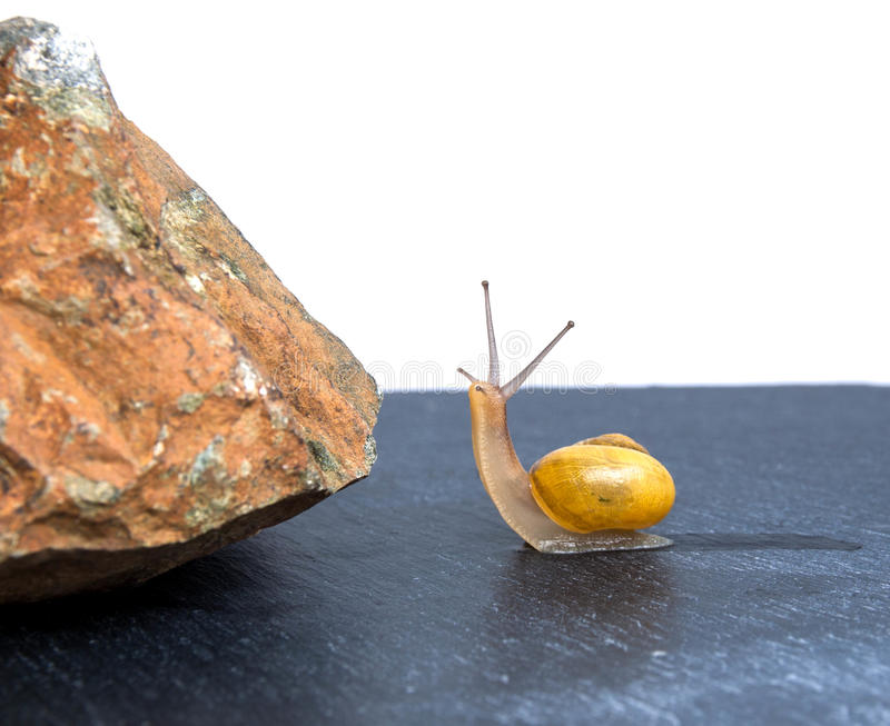 Snail in front of the obstacle stock photos