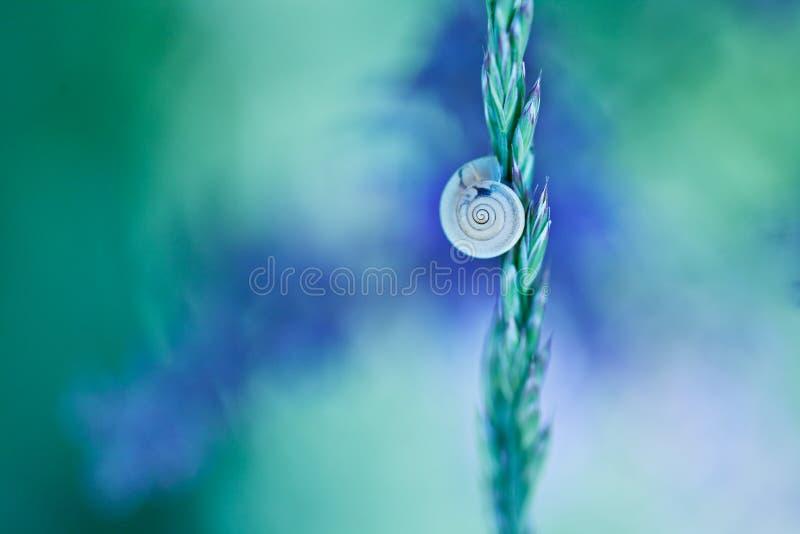 Snail On Grass Stock Photography