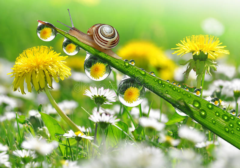 Snail on grass royalty free stock image