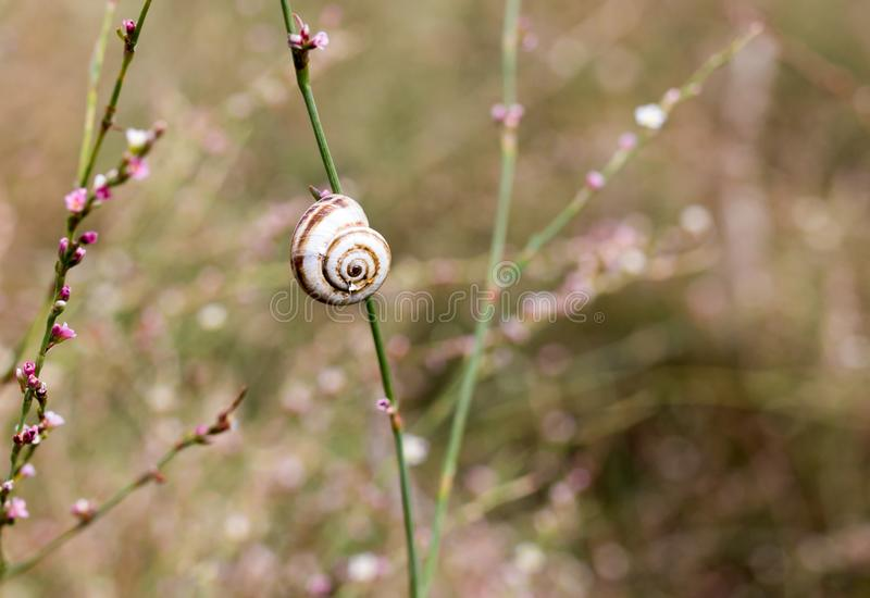 Snail on grass in nature. macro stock images